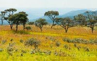 Savanna Woodland Upemba National Park Congo Africa